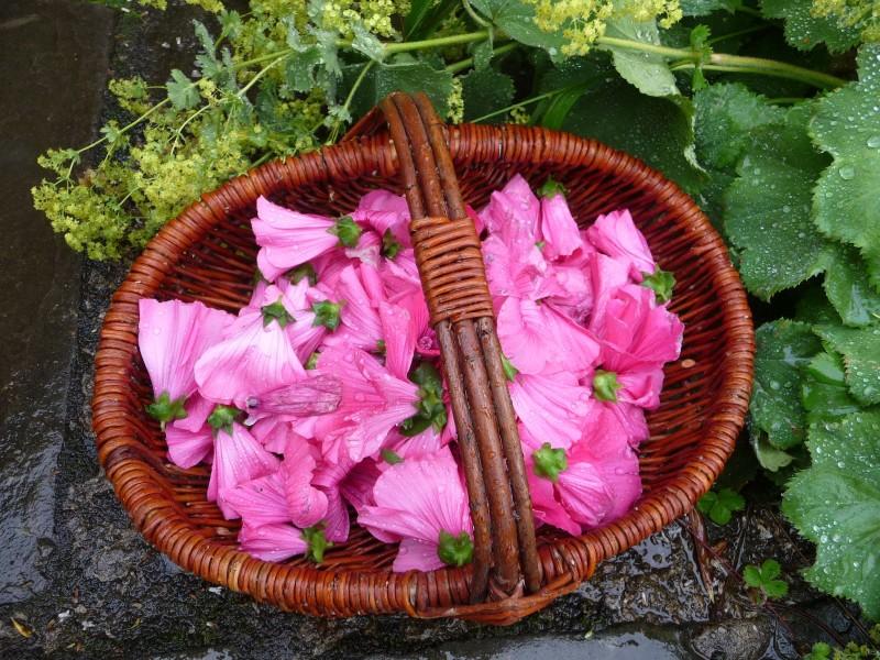 Фото 29: Сбор цветов гибискуса