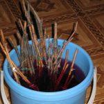 Фото 46: Обеззараживание черенков винограда
