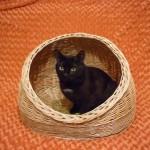 Фото 26: Домик для кошек из ротанга