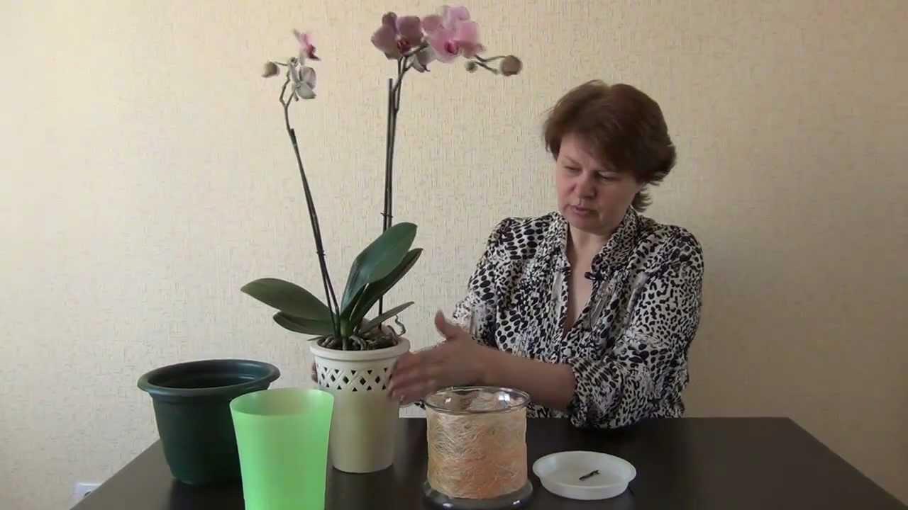 Пересадка орхидеи в горшки