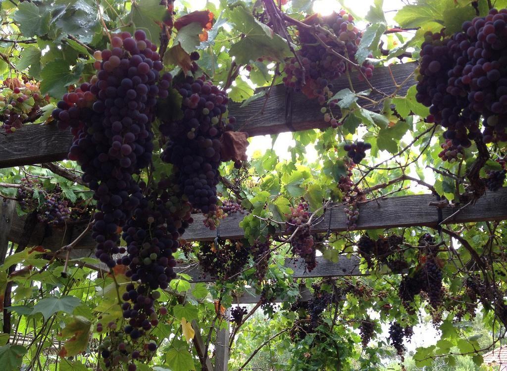 Перголы для выращивания винограда