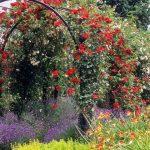 Фото 102: Перголы для вьющихся растений фото