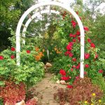 Фото 123: Садовые арки фото