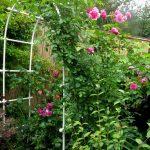 Фото 122: Арки в саду и огороде фото