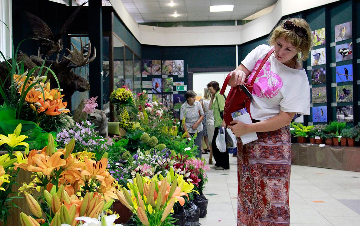 Покупка луковиц лилии