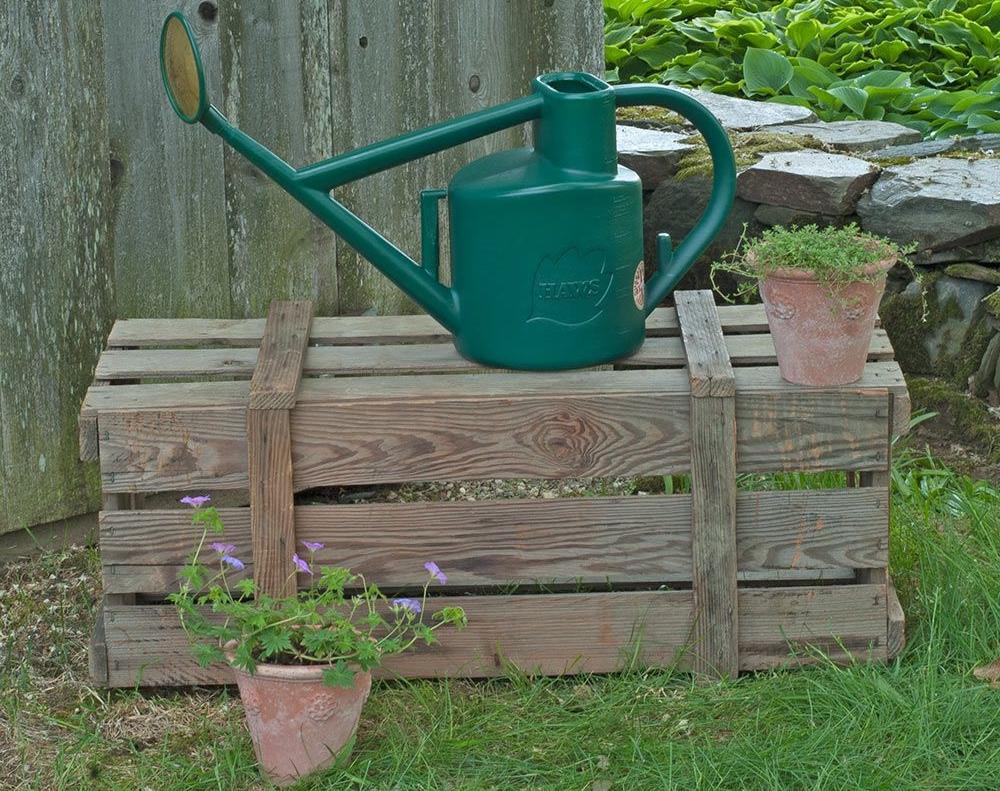 Полив кампанулы садовой многолетней