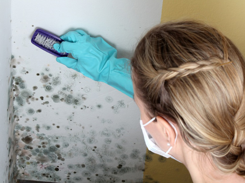 Удаление грибка со стен