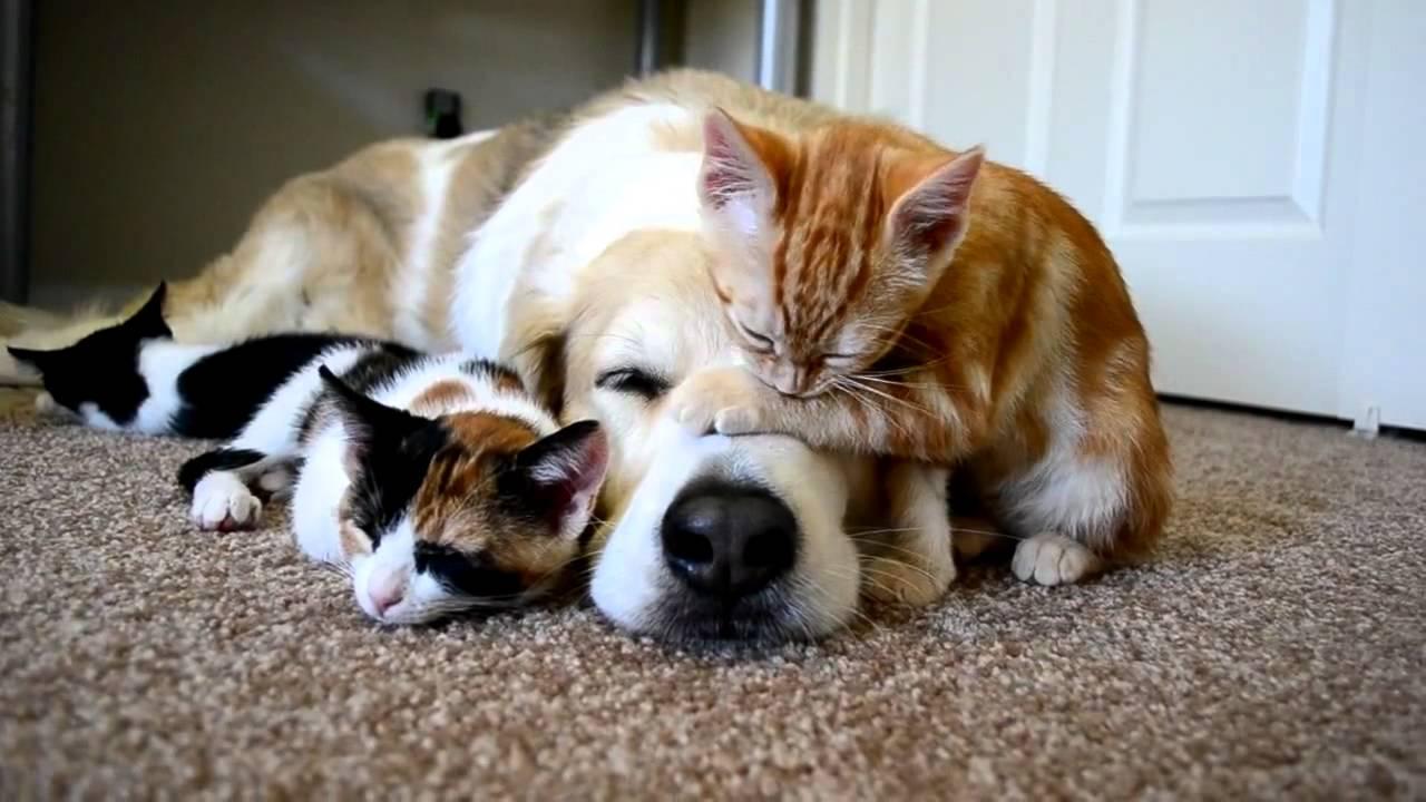 Животные на ковре