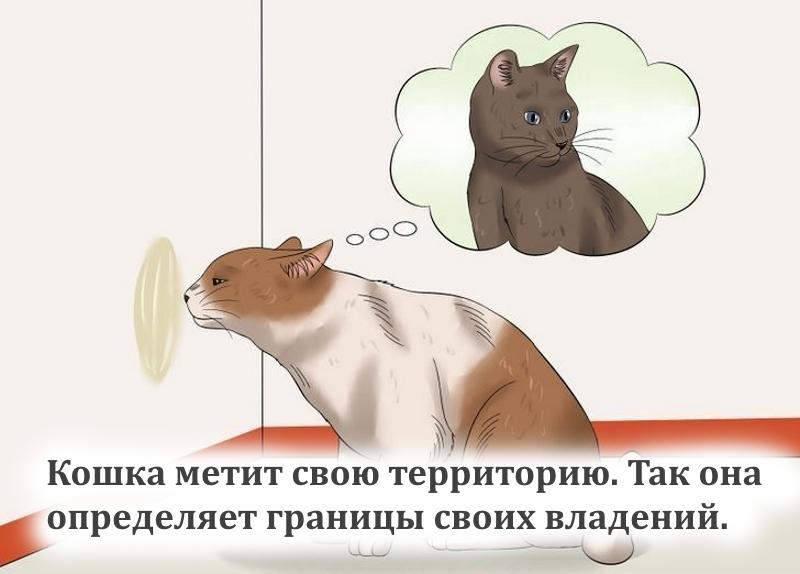 Мечение территории кошки