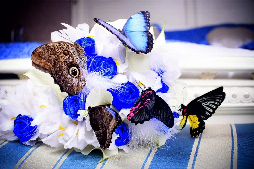 Бабочки на 14 февраля