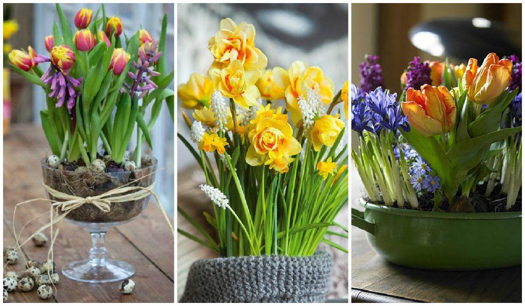 Весенние композиции из цветов в горшках для выращивания дома