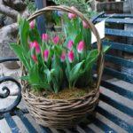 Фото 79: Тюльпаны в корзине на 8 марта