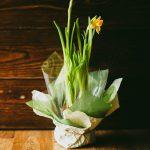 Фото 63: Нарциссы в горшке в подарок