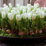 Фото 64: Тюльпаны в земле с луковицей в подарок на 8 марта