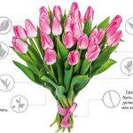 Фото 23: Как выбрать тюльпаны при покупке