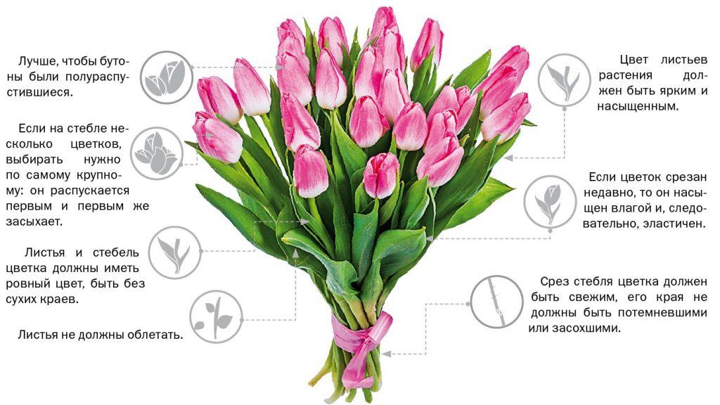 Как выбрать тюльпаны при покупке