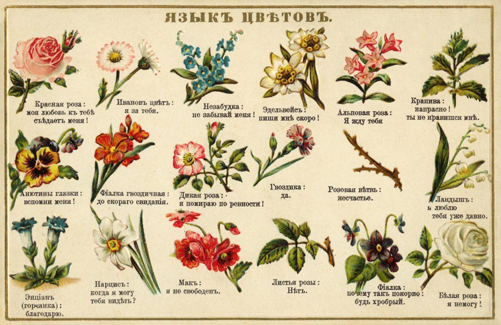 Как выбрать цветы по этикету