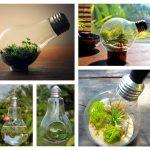 Фото 54: Необычные флорариумы в лампочках в подарок
