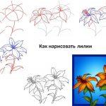 Фото 64: Нарисовать лилии поэтапно