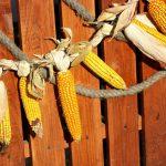 Фото 43: Гирлянда из кукурузы