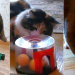 Фото 21: Игрушки из контейнеров для кошек
