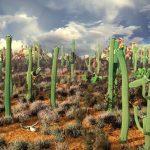 Фото 4: Мексиканские кактусы