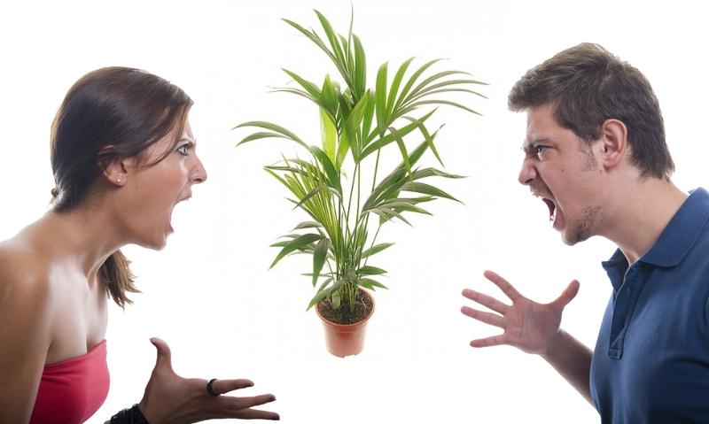 Комнатная пальма и ссоры в семье