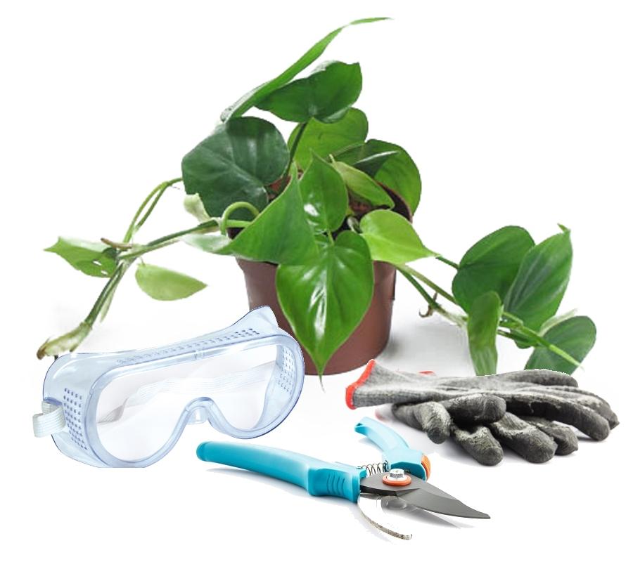 Филодендрон и защитные средства