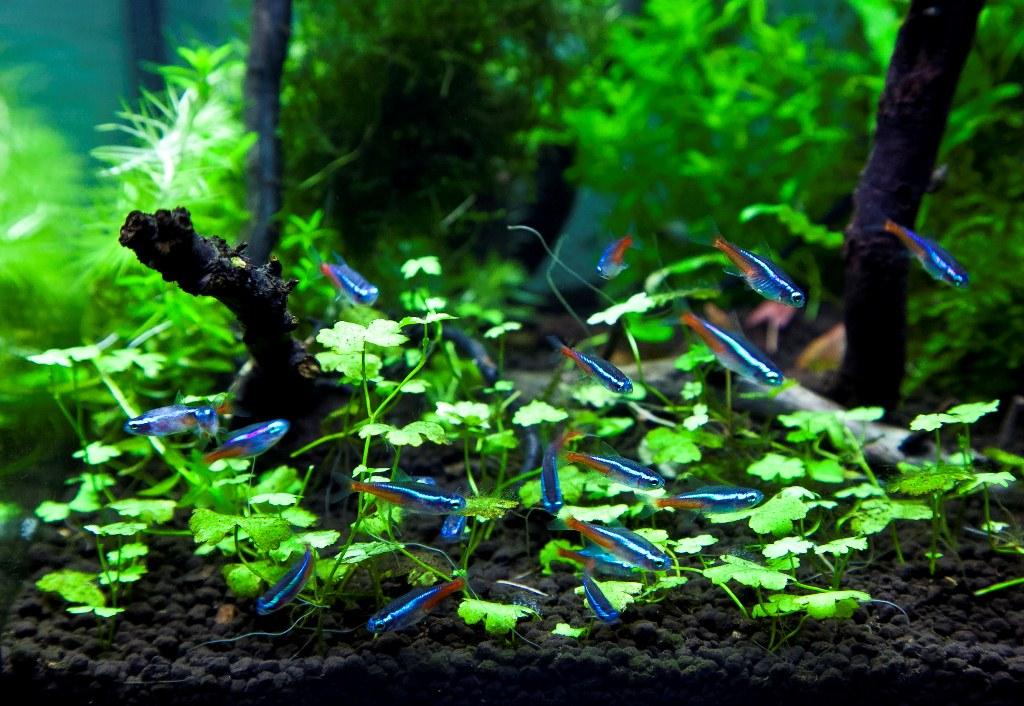 Яркие рыбки в аквариуме