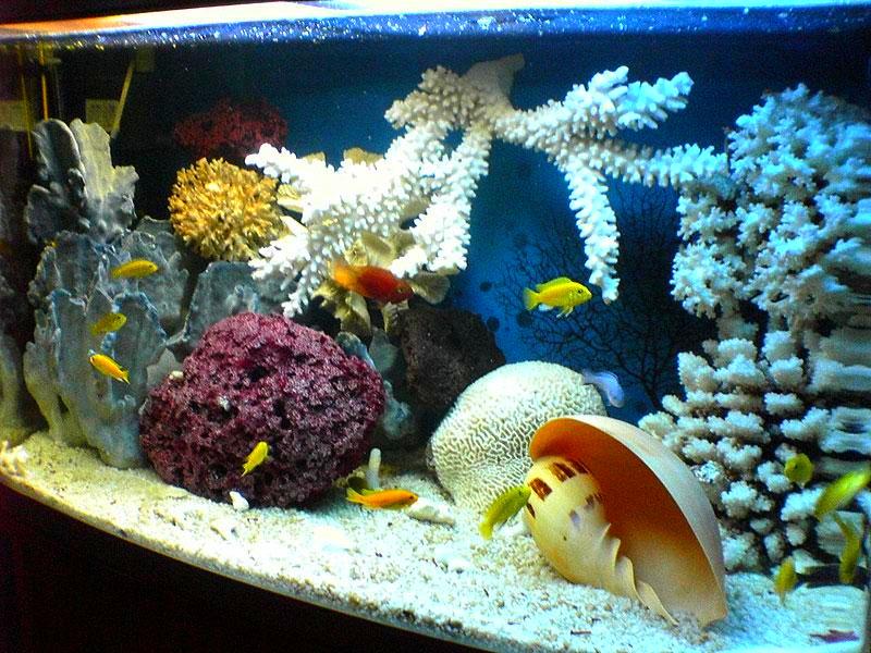 Яркий аквариум в морском стиле