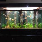 Фото 52: Деревья в аквариуме