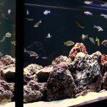 Фото 51: Оформление камнями аквариума