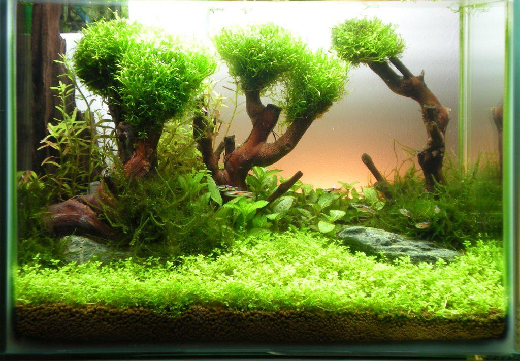 Деревья из коряг в аквариуме
