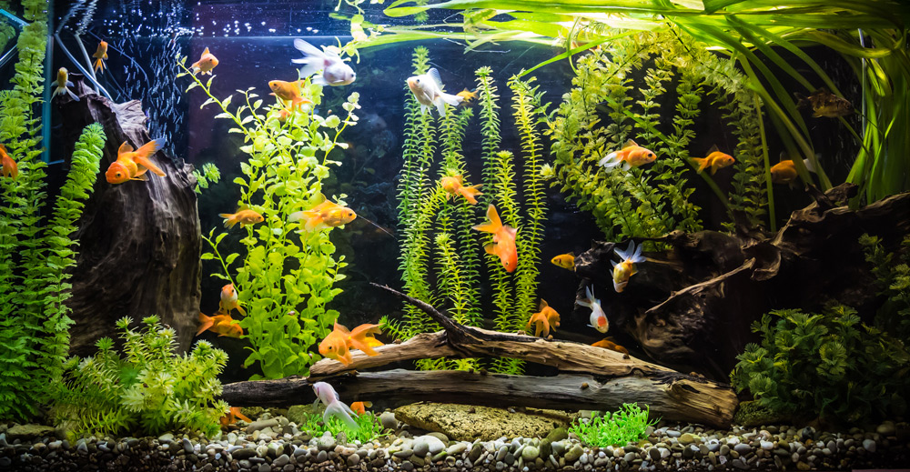 Коряги в дизайне аквариума