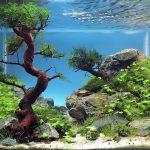 Фото 58: Дизайн аквариума