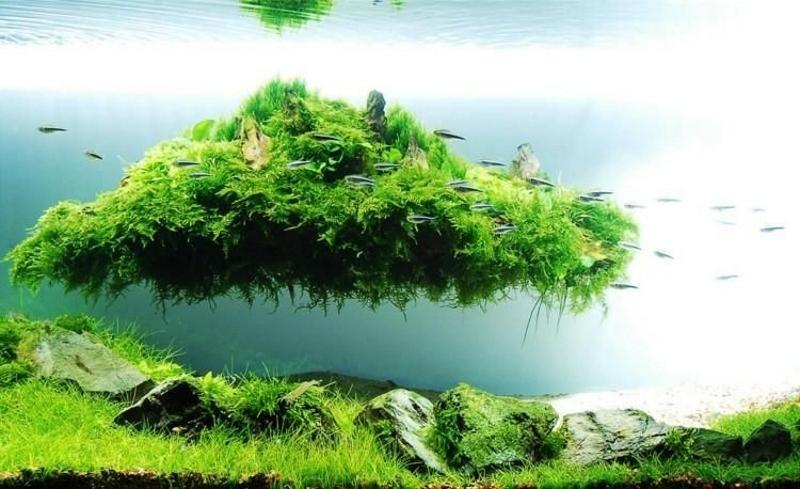 Плавающий остров в аквариуме