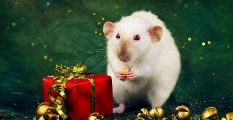 Подарок к Году Крысы