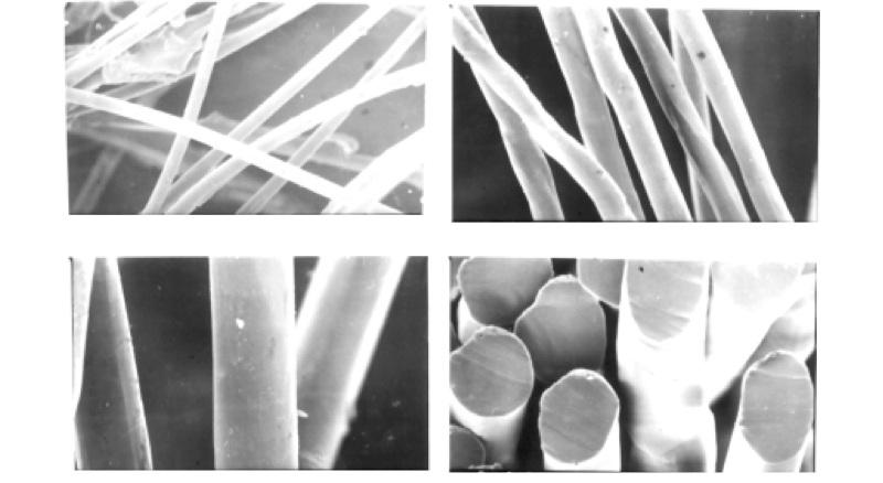 Микрофотографии поверхности и поперечного сечения волокна лиоцелл