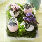 Фото 57: Комнатные цветы в яичной скорлупе
