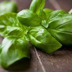 Фото 41: растение базилик фото