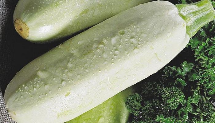 Сорт кабачков Грибовский