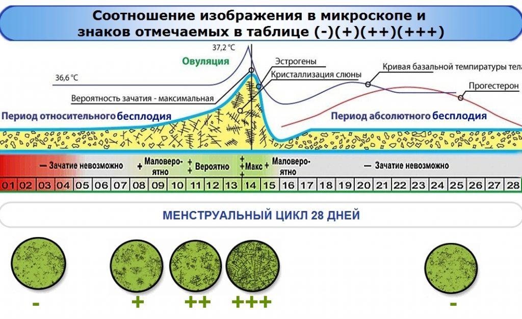 Взрыв гормонов в период овуляции