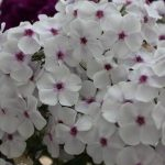 Фото 1: Нежные цветы