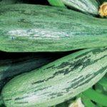 Фото 9: Зеленые кабачки