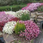 Фото 18: Ландшафтный дизайн из цветка камнеломка