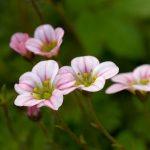 Фото 58: Розовые лепестки