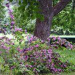 Фото 15: Сиреневый цвет