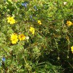 Фото 54: Сбор лекарственных трав