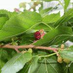 Фото 7: Цветение дерева