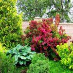 Фото 7: Вейгела в саду